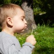 Cute little boy blowing dandelion — Stock Photo #83846748