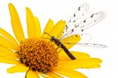 Dragonfly on a flower. — Stock Photo