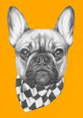 French Bulldog with scarf — Stock Photo