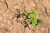 Growing little tree on dry and crack soil — Stock Photo