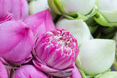 Folded petal waterlily for paying respect to Buddha in Thailand — Stock Photo