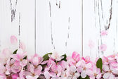 Spring apple blossom over old vintage wooden background — Stock Photo