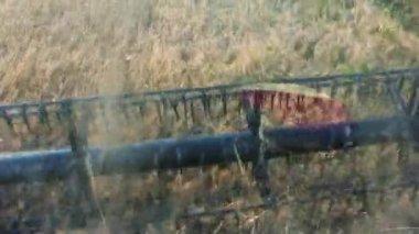 Combine the field mows harvest — Stock Video