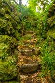 Rocky stairs into the jungle — Stock Photo
