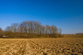 Agriculture Landspace — Stock Photo