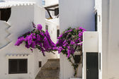 Alley with flowers fishing village, Menorca, Spain — Stock Photo