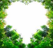 Złoty deszcz drzewa w kształcie serca — Zdjęcie stockowe