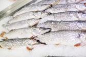 Pike fresh fish on ice. — Stock Photo