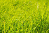 Background of a green grass. — Stock Photo