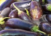 Eggplant torn soaked in water, preparations for preservation, — Stock Photo