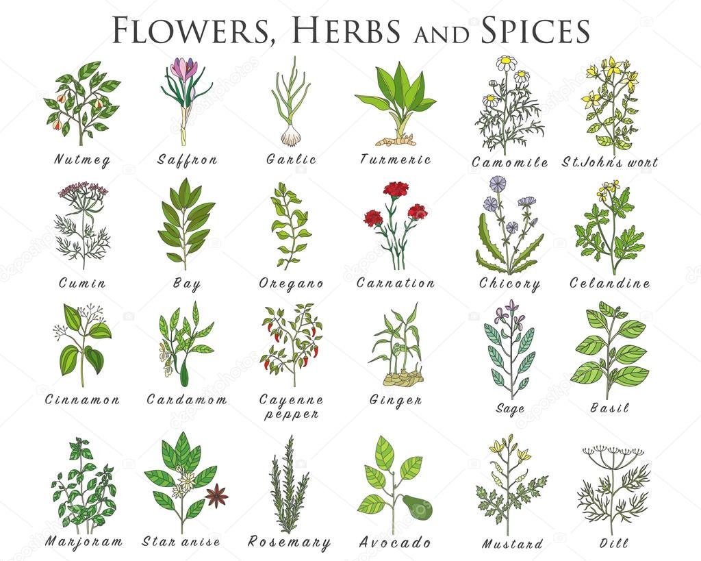 list of herbs spices 2018-7-16 a complete list of cooking spices and herbs - food fact spices are integral part of cooking to develop a nice aroma and taste in various spices some are used in regular cooking and some use occasionally.