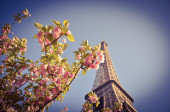 Flower and Eiffel Tower — Stock Photo