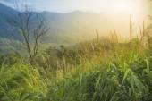 Natural landscapes — Stock Photo