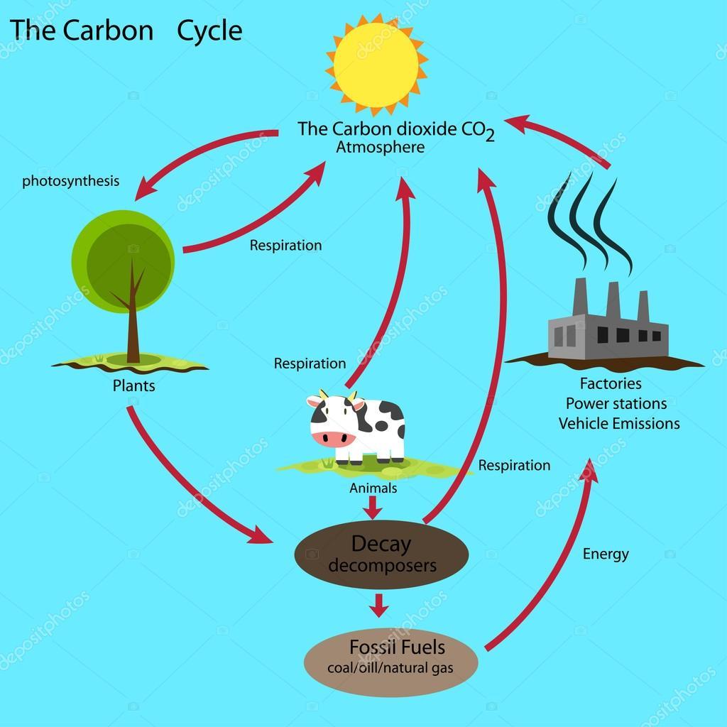 AW1hZ2VuZXMgY2ljbG8gZGVsIGNhcmJvbm8 on The Carbon Cycle Worksheet
