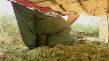 Stack of tobacco leaves under tarpaulins — Stockvideo