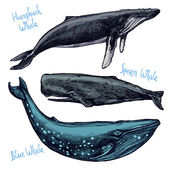 Different Hand Drawn Whales — Stock Vector