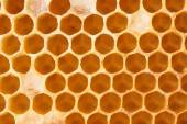 Honeycomb full of honey — Stock Photo
