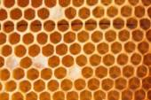 Honeycomb empty and full of honey — Stock Photo