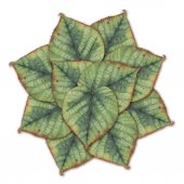 Pattern with linden leaves — Stock Photo