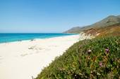 White sand beach paradise längs Pacific Coast Highway route en, USA, California — Stockfoto