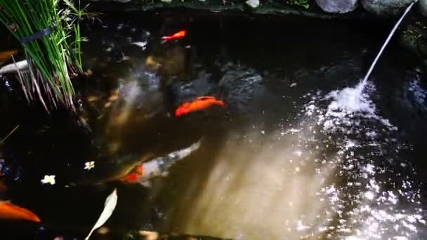Koi pond stock videos royalty free koi pond footages for Koi pond jets