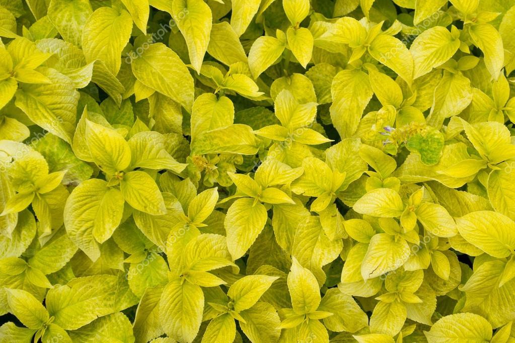 gelbe bl tter von pflanzen stockfoto 120557488. Black Bedroom Furniture Sets. Home Design Ideas