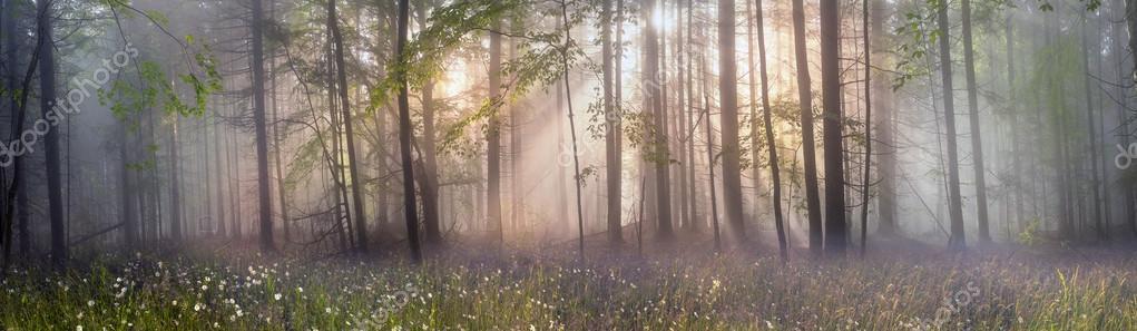 Фотообои Карпатский лес деревья