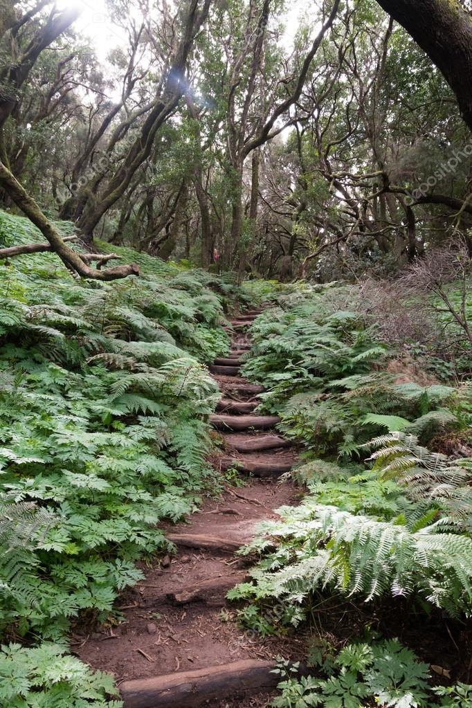 Фотообои Trecking path in the laurel forest, gomera