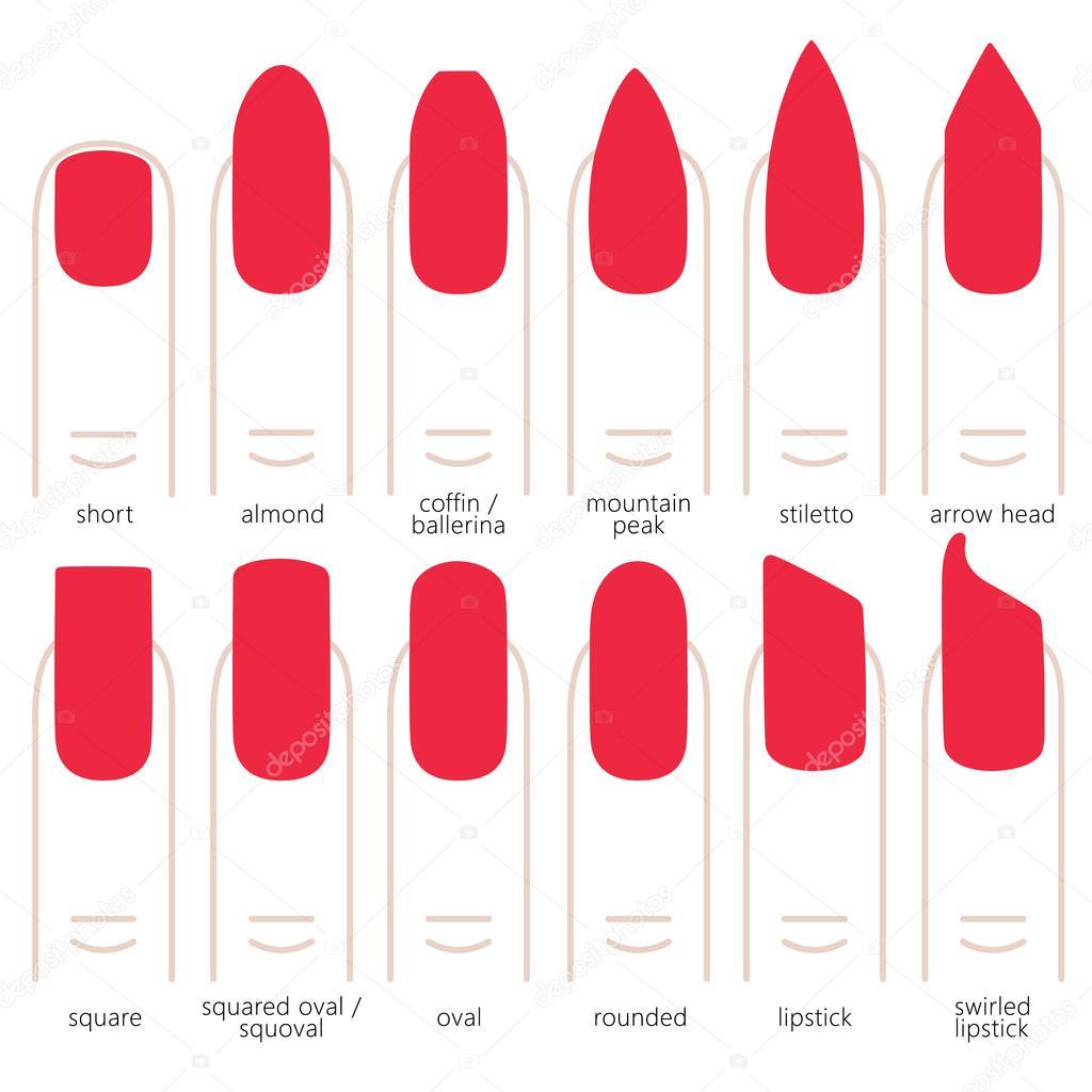 Forme de l ongle diff rent image vectorielle 113183688 - Forme des ongles ...