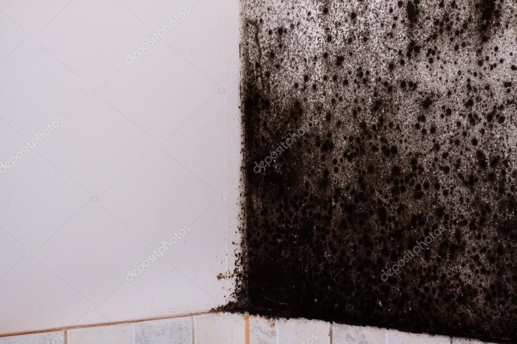 schwarzer schimmel im haus — stockfoto © cegli.o2.pl #97068810
