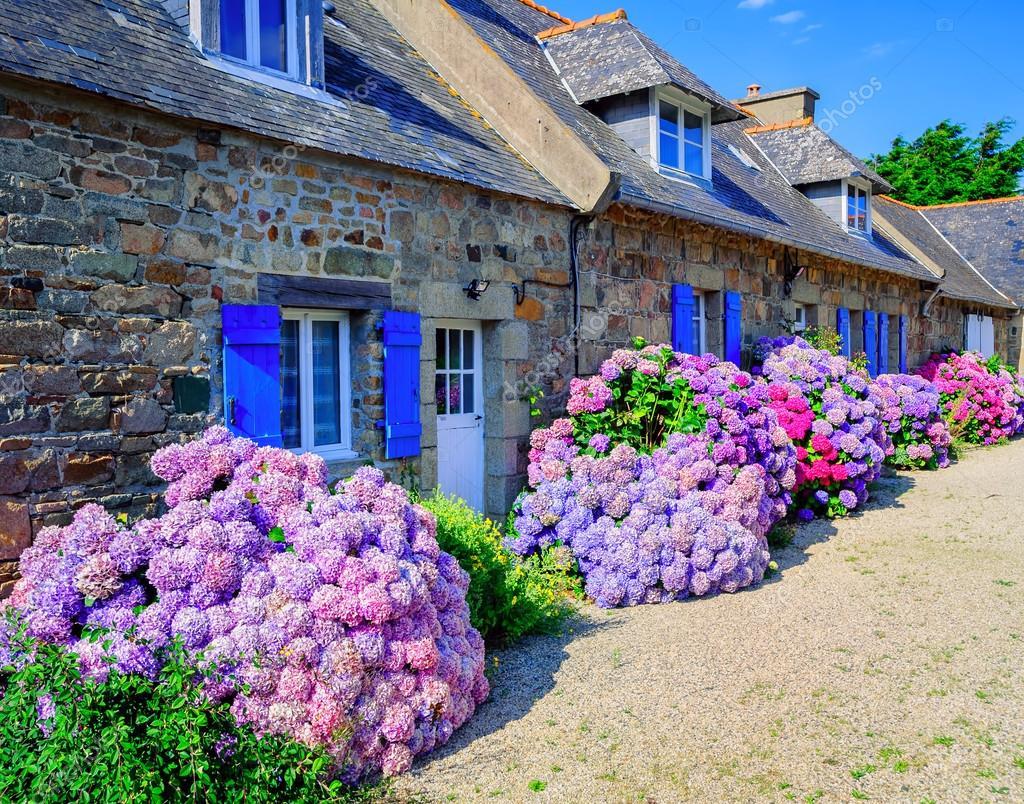 Fleurs Dhortensias Color 233 Es Dans Un Petit Village