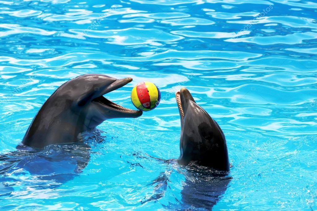 Delfin Spiele Kostenlos Spielen