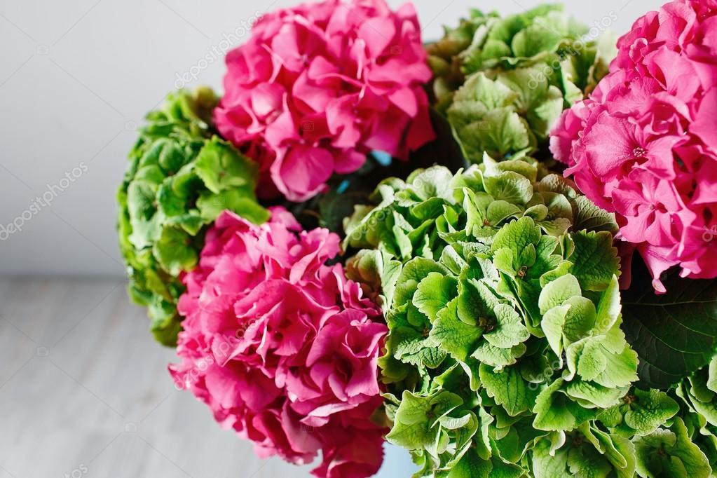 mano sosteniendo un racimo verde y el rosado color de fondo de hortensias blancas colores