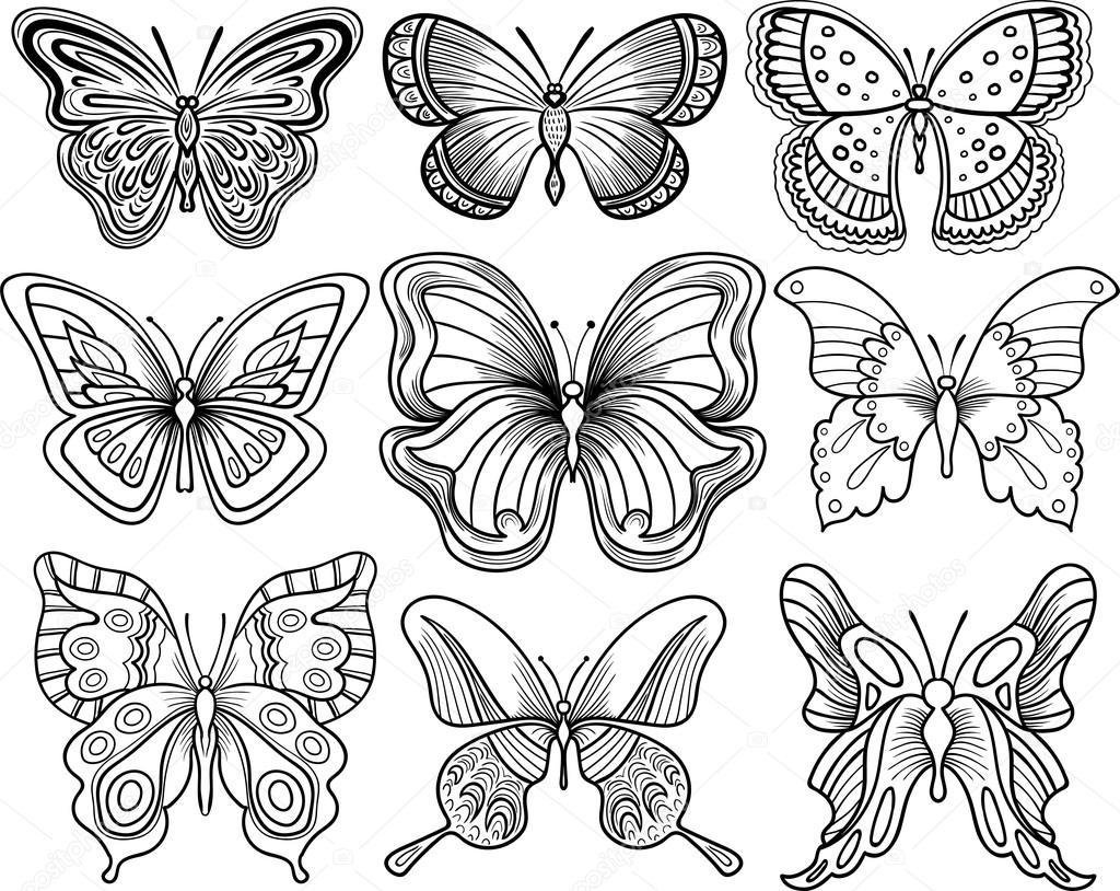 Insect Symmetry  crayolacom