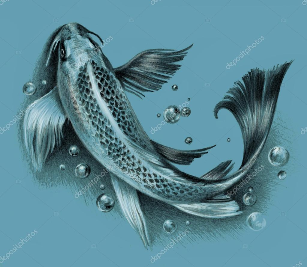 Sketch japanese koi fish isolated on a blue background for Coy poisson