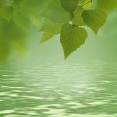 Green foliage and beauty bokeh