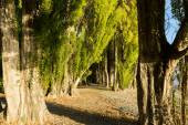New Zealand forest path