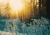 Zimní scéna