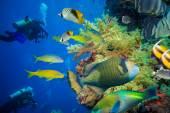 Tropické ryby a potápěč