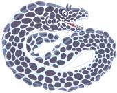 Vector illustration of a moray eel swimming on a white background