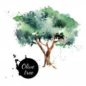 Olive tree vector illustration Hand drawn watercolor painting on white background