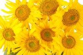 Krásnou kytici žlutých slunečnic