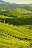 Tuscany, rural sunset landscape.