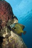 Podvodní tropické angel ryba
