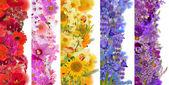 Streifen aus Blumen