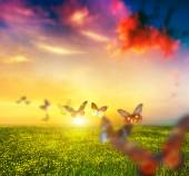 Colorful butterflies flying over meadow