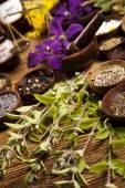 Friss gyógynövények