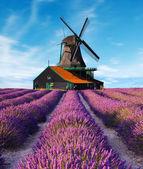 Levandulové pole s větrný mlýn