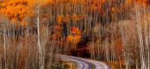 Picturesque Autumn forest