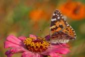 Butterfly sitting on pink  flower